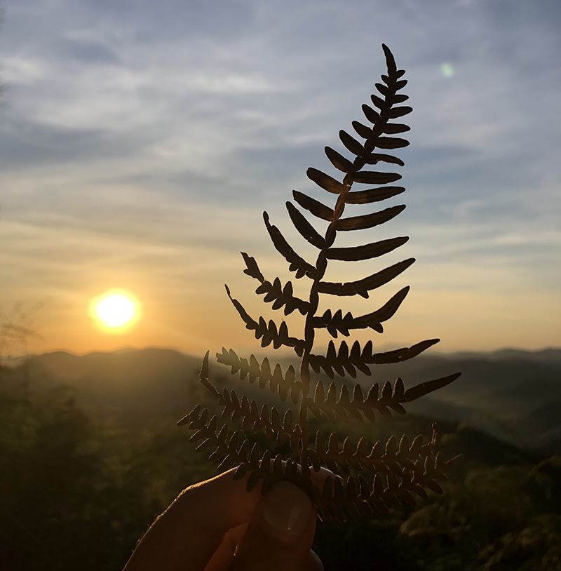 A leaf is silhoutted in the foreground as the sun awakens above mountains on a brisk morning in Minais Gerais, Brazil on June 2, 2019. Photo/ Jesmel Moreno